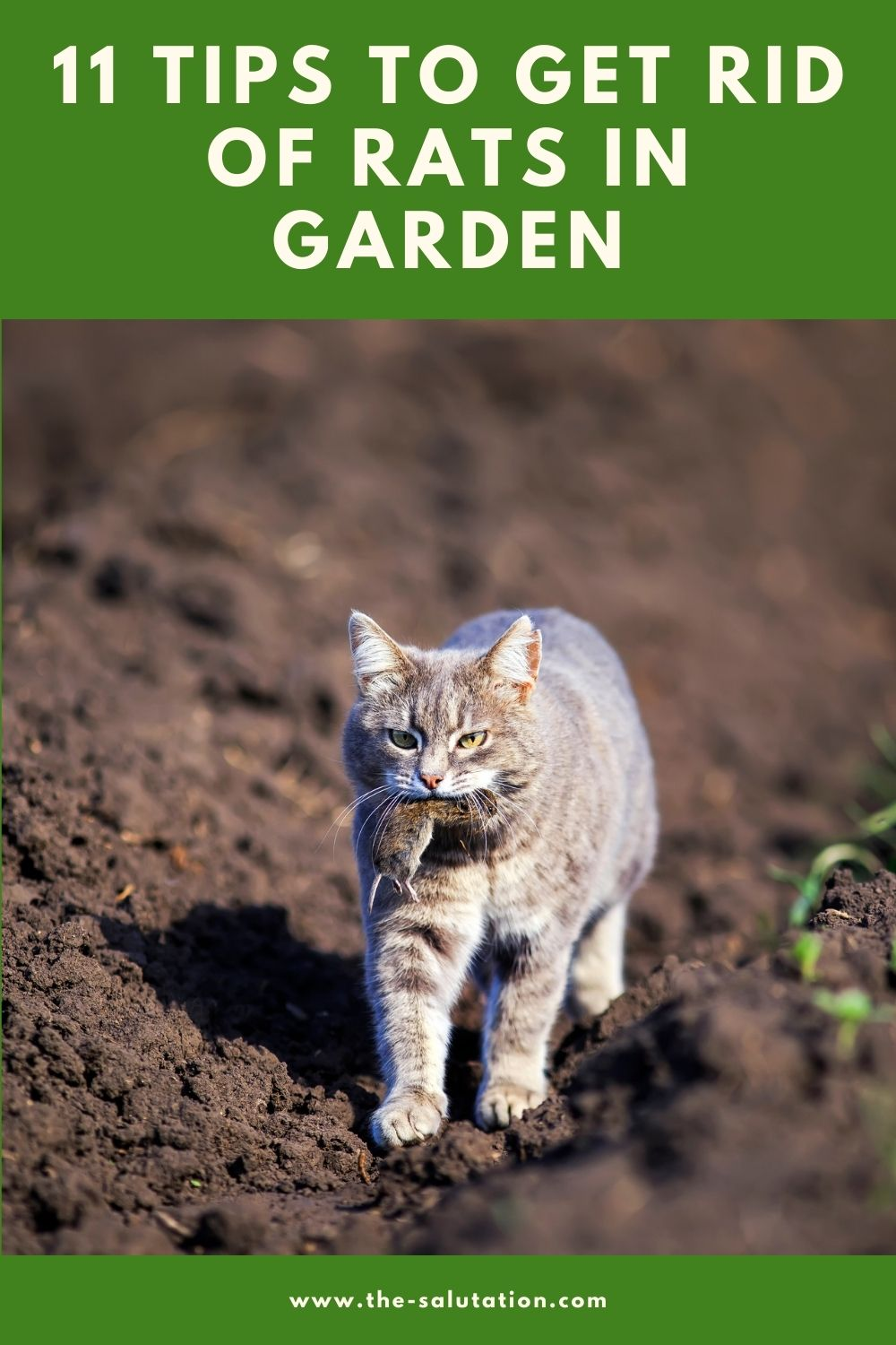 11 Tips to Get Rid of Rats in Garden 4