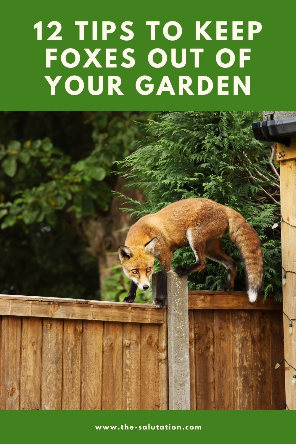 12 Tips to Keep Foxes Out of Your Garden 1