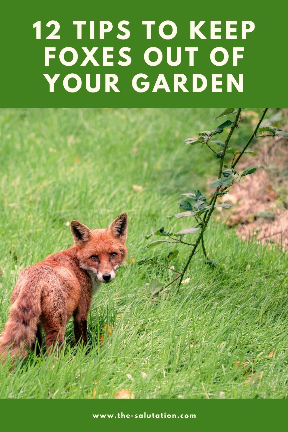 12 Tips to Keep Foxes Out of Your Garden 2