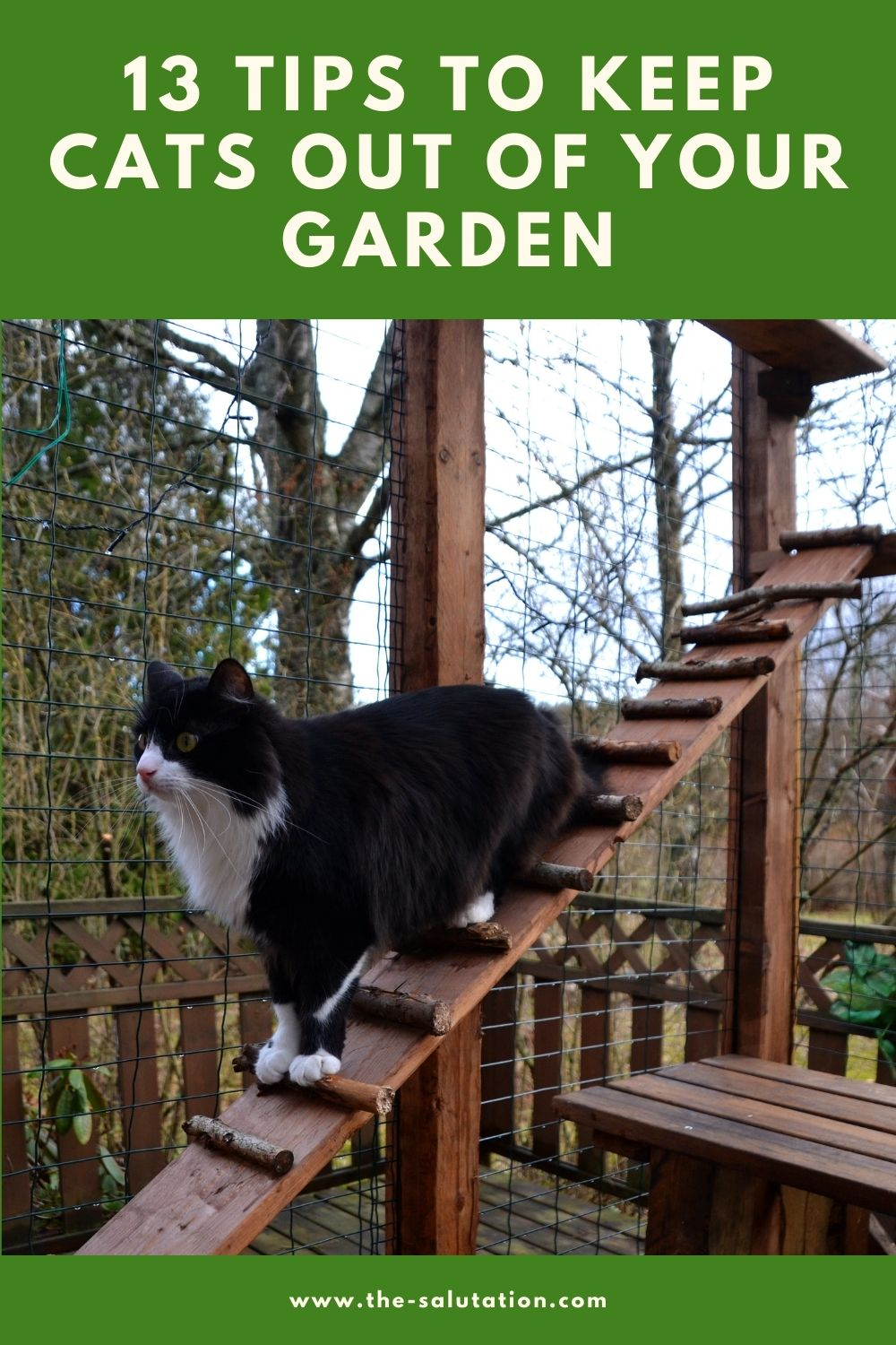 13 Tips to Keep Cats Out of Your Garden 1