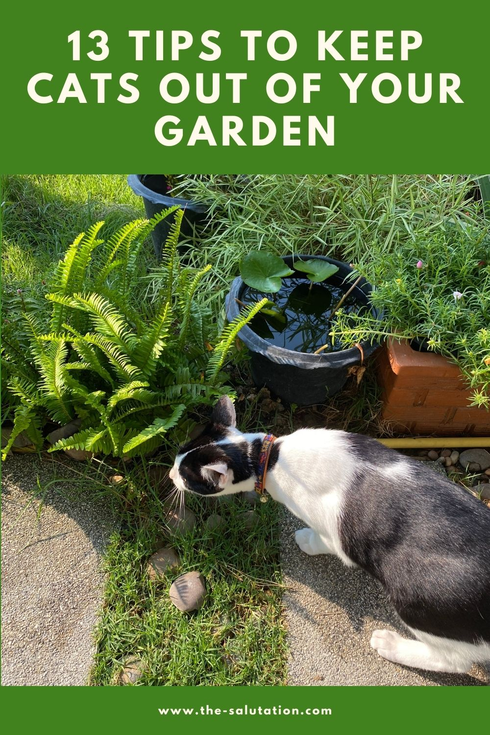 13 Tips to Keep Cats Out of Your Garden 2
