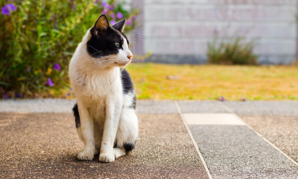 13 Tips to Keep Cats Out of Your Garden