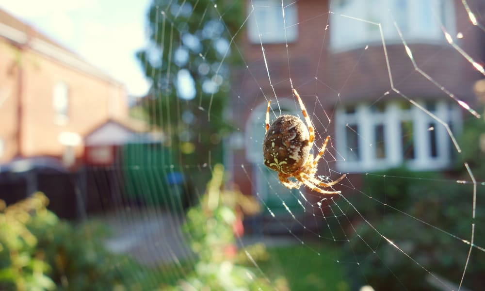 14 Tips to Get Rid of Spiders in the Garden
