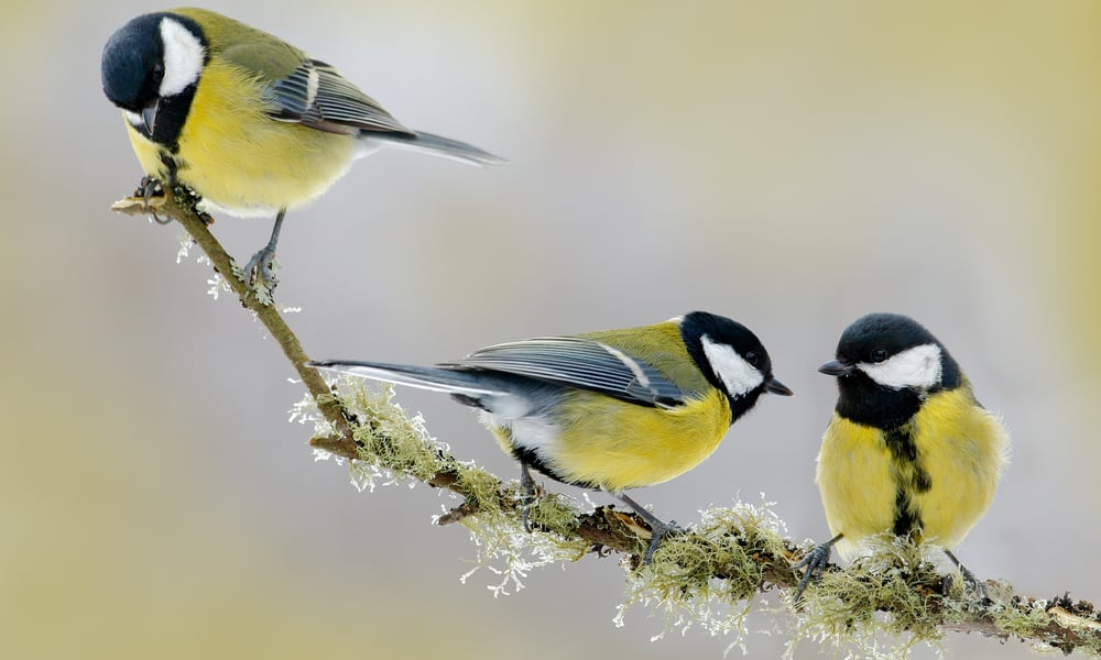 5 Ways to Attract Birds to Your Garden