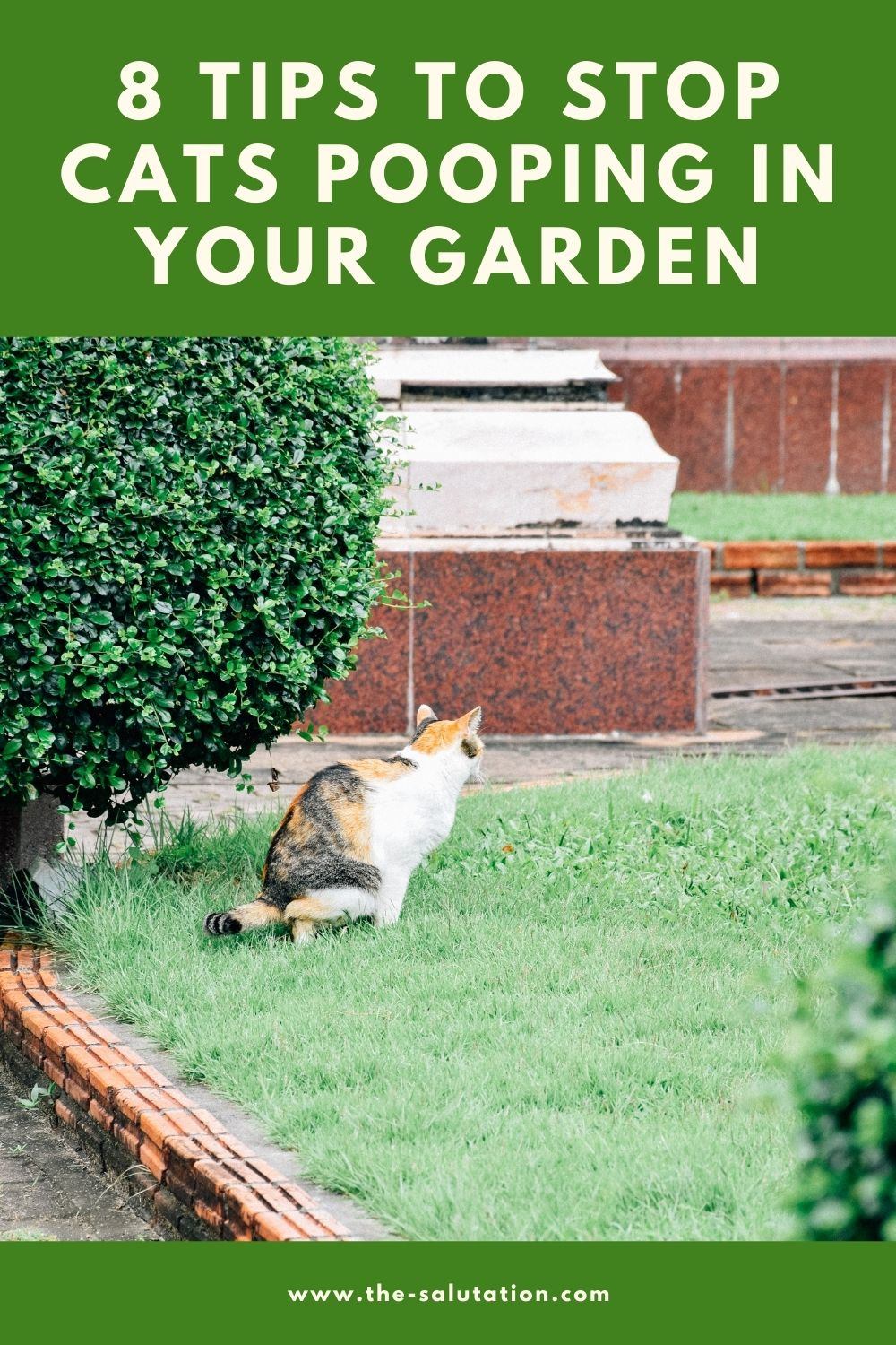 8 Tips to Stop Cats Pooping In Your Garden 1