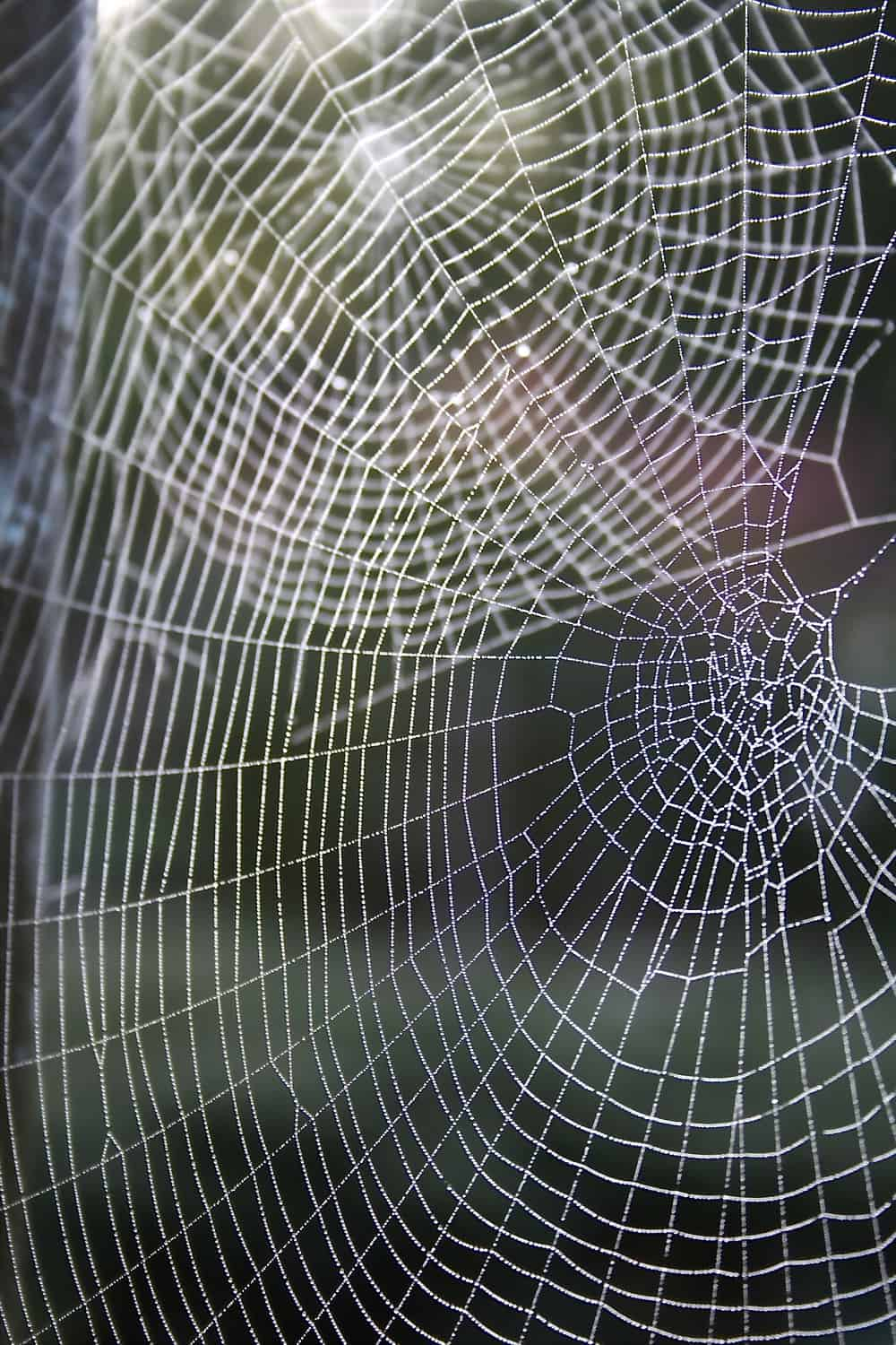 howto get rid of spiders in garden