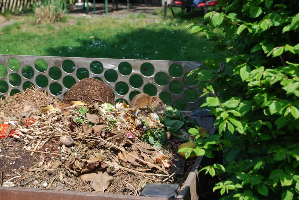 Make your compost area inhabitable