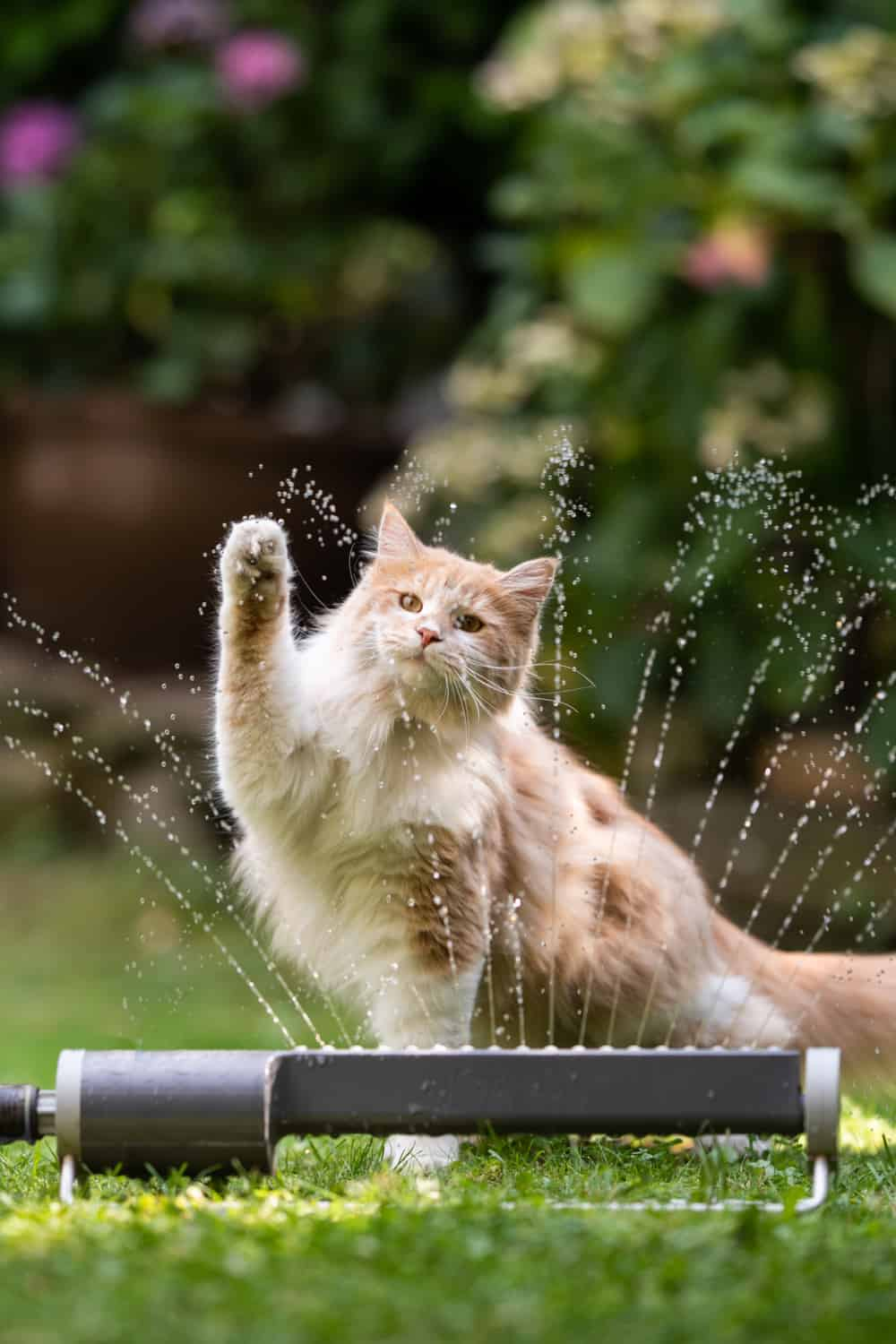 Scare away cats with a motion-activated sprinkler
