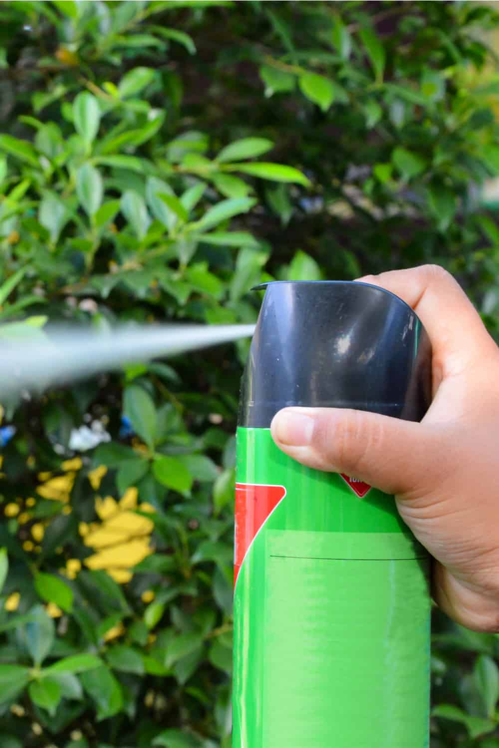 Use a shop-bought insecticide or natural repellents