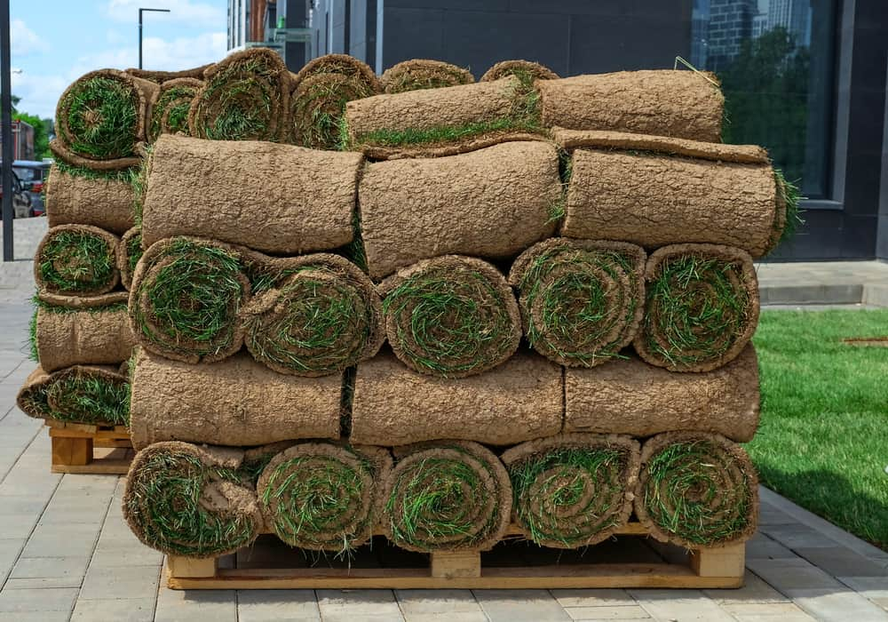 10 Best Turf Suppliers in the UK