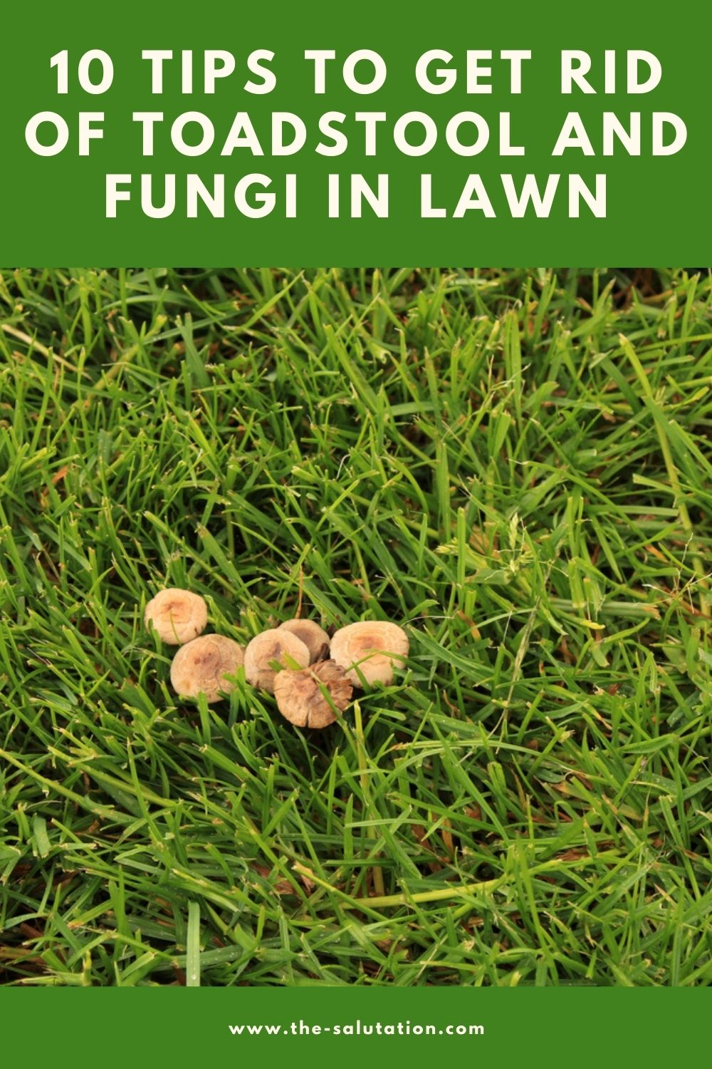 10 Tips To Get Rid of Toadstool and Fungi In Lawn 2