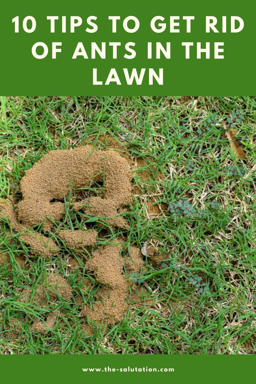 10 Tips to Get Rid of Ants in the Lawn 1
