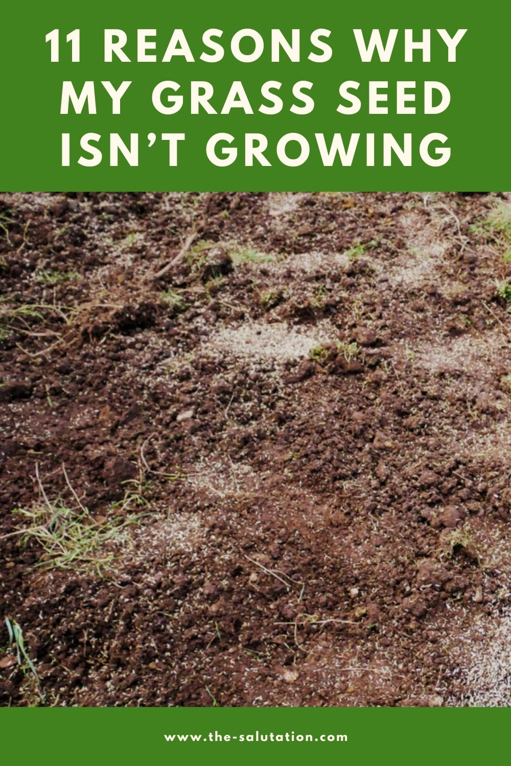 11 Reasons Why My Grass Seed Isn't Growing (Tips to Fix) 1