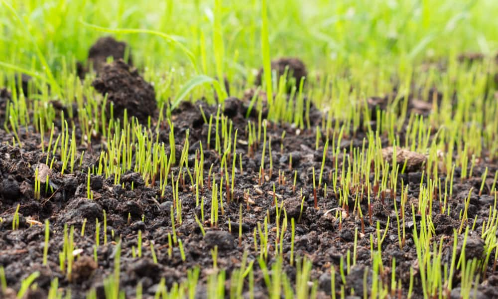 11 Reasons Why My Grass Seed Isn't Growing (Tips to Fix)