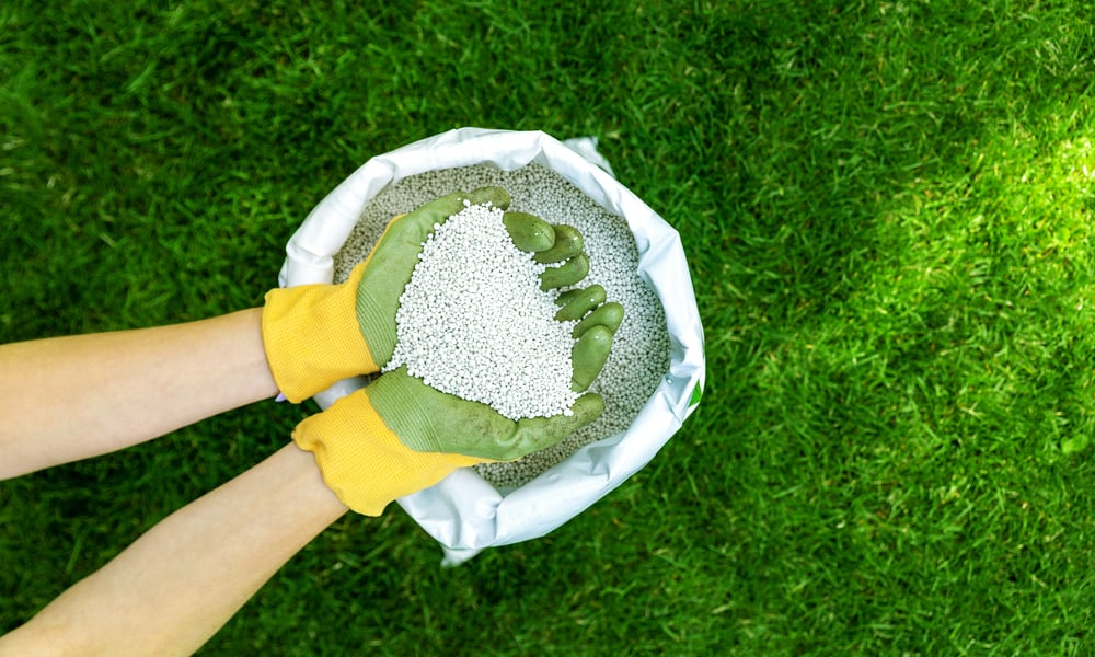 15 Tips for Autumn Lawn Feed