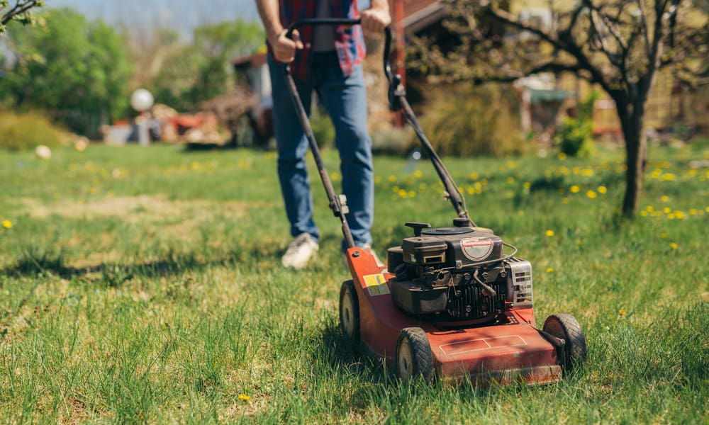 15 Tips for Lawn Grass Cutting