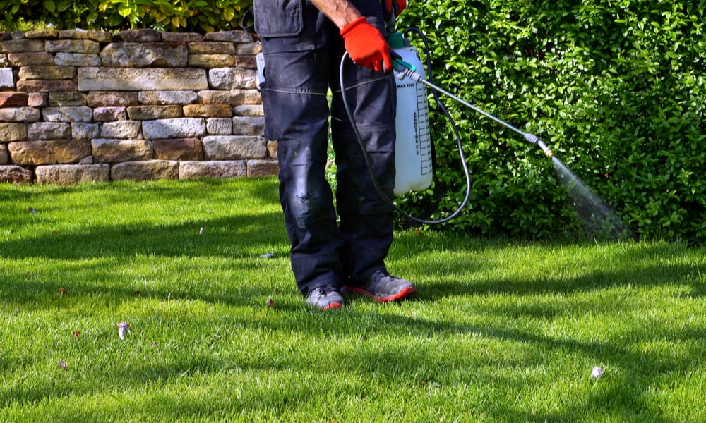 15 Tips to Choose a Lawn Weed Killer