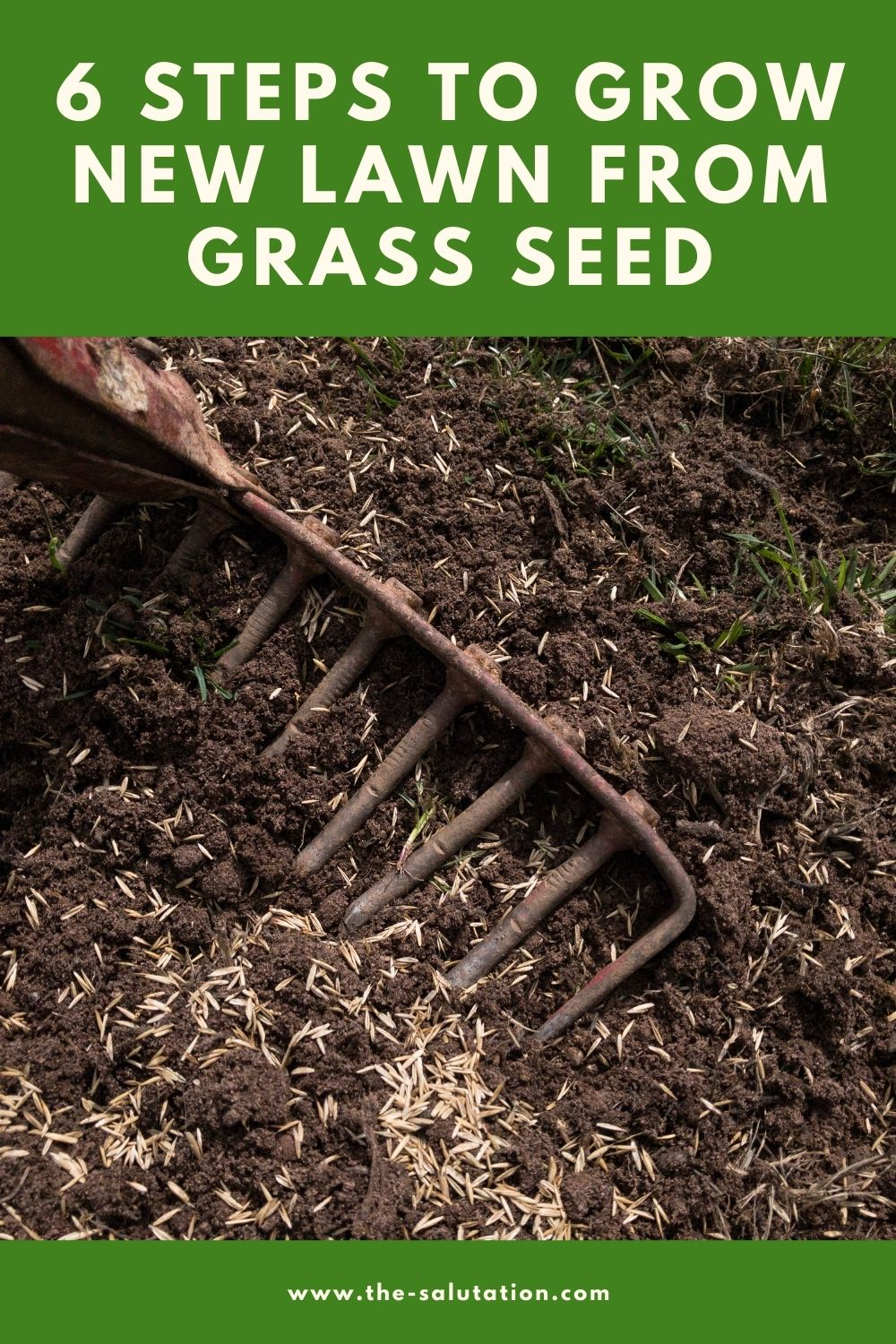 6 Steps to Grow New Lawn from Grass Seed 2