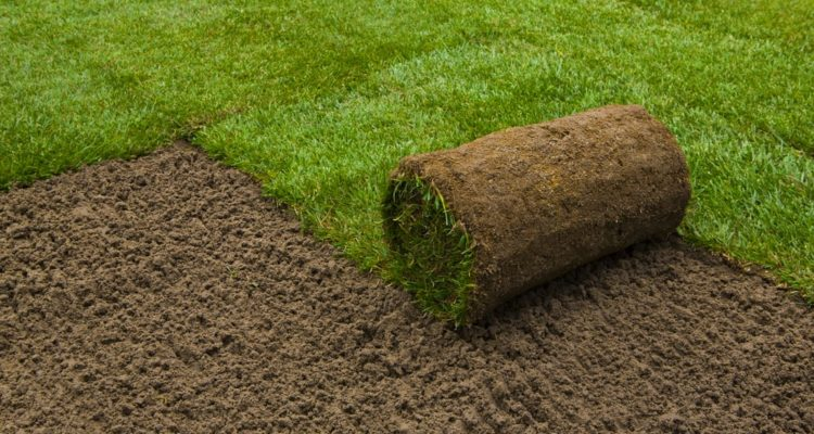 7 Tips to Choose Garden Turf
