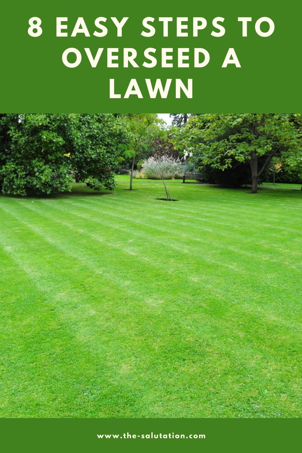 8 Easy Steps to Overseed a Lawn 1