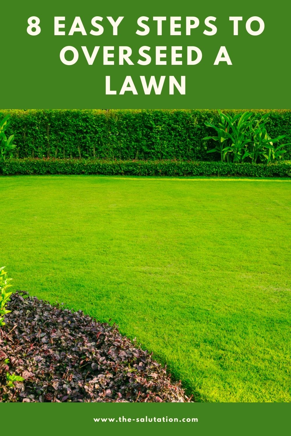 8 Easy Steps to Overseed a Lawn 2