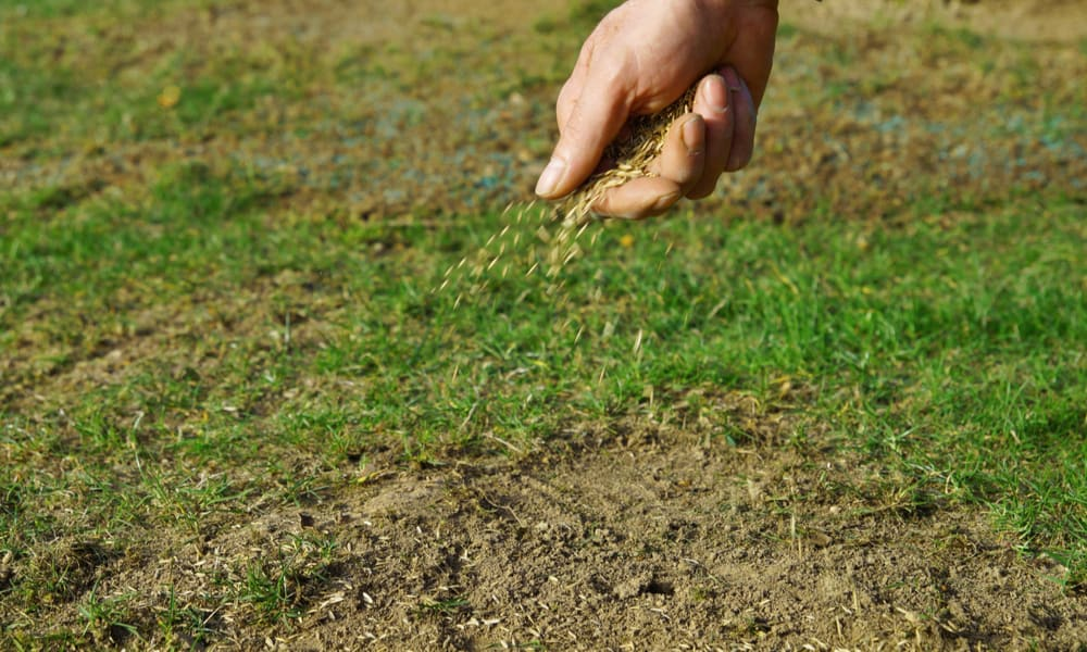 8 Easy Steps to Overseed a Lawn