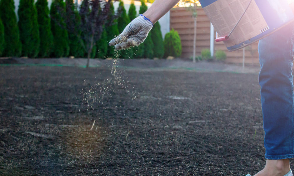 8 Easy Steps to Sow Grass Seed