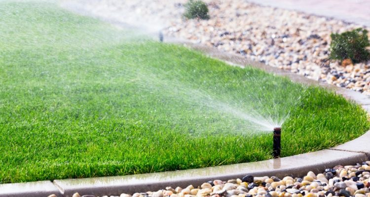 8 Tips for Watering New Turf