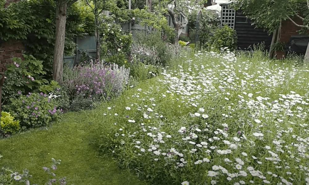 Advantages of Meadow Turf