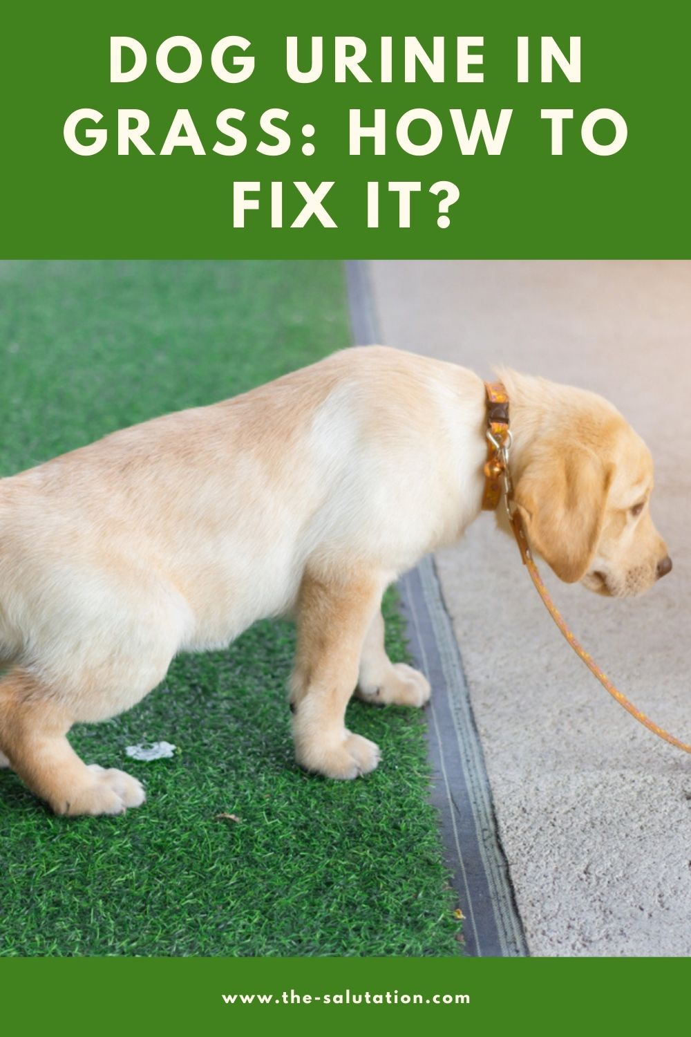 Dog Urine in Grass How to Fix it (8 Tips) 2