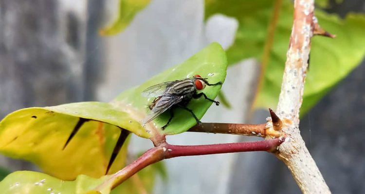 15 Tips to Get Rid of Flies in Your Garden