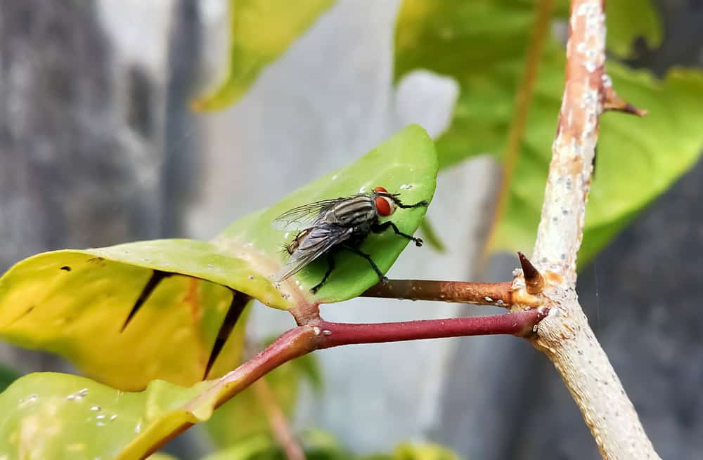 Get Rid of Flies in your Garden
