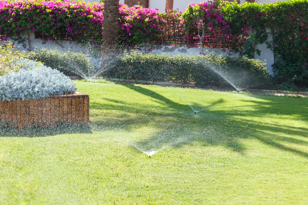 Give your new grass plenty of water