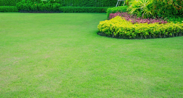 Grass Seed Vs. Turf: Which is Better?