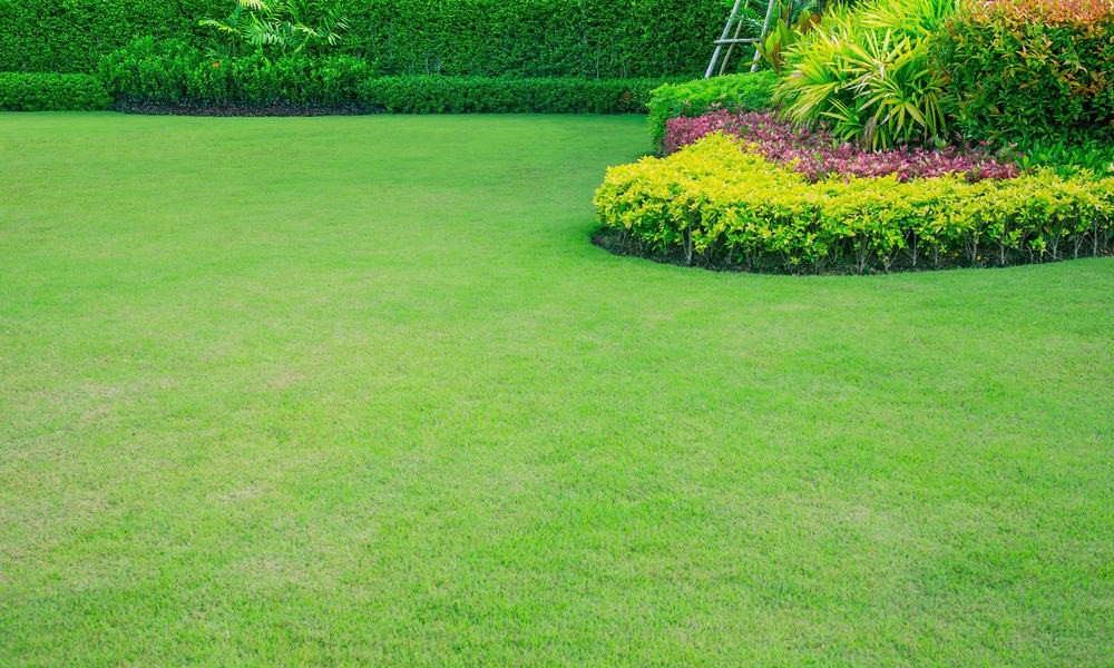 Grass Seed Vs. Turf Which is Better