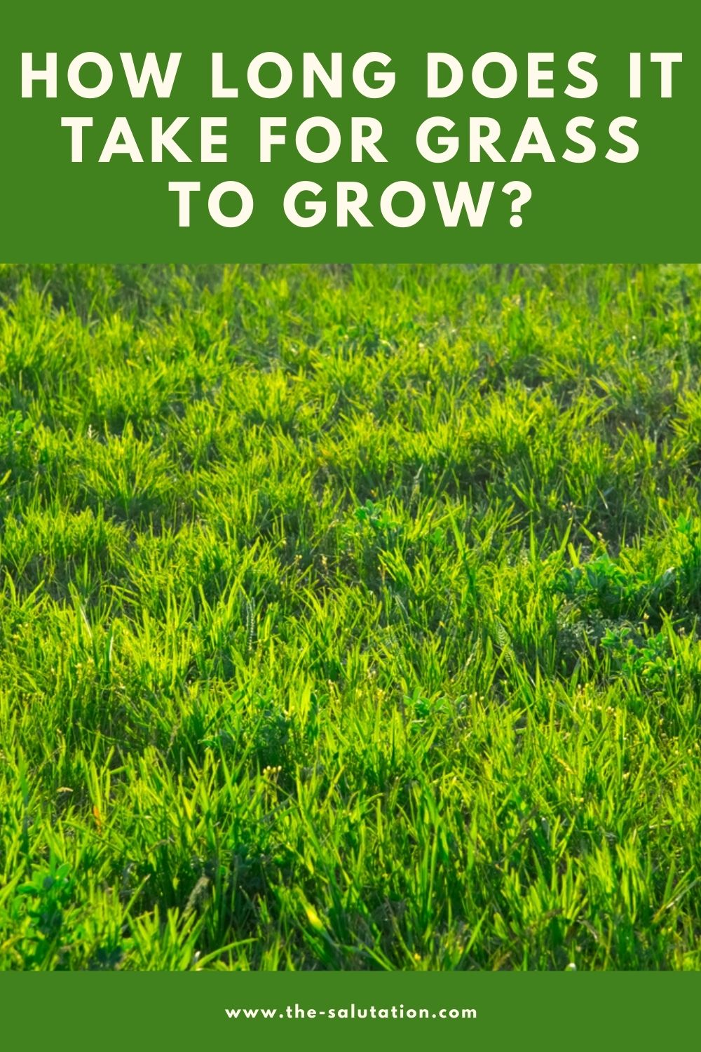 How Long Does It Take For Grass To Grow 2