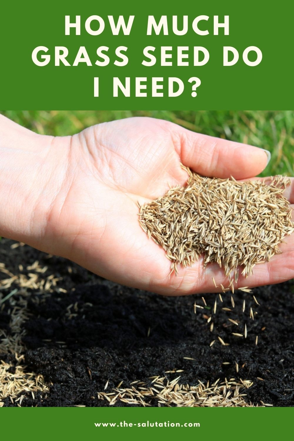 How Much Grass Seed Do I Need 2