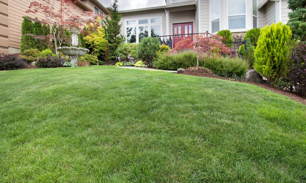 How to tell if your grass needs watering