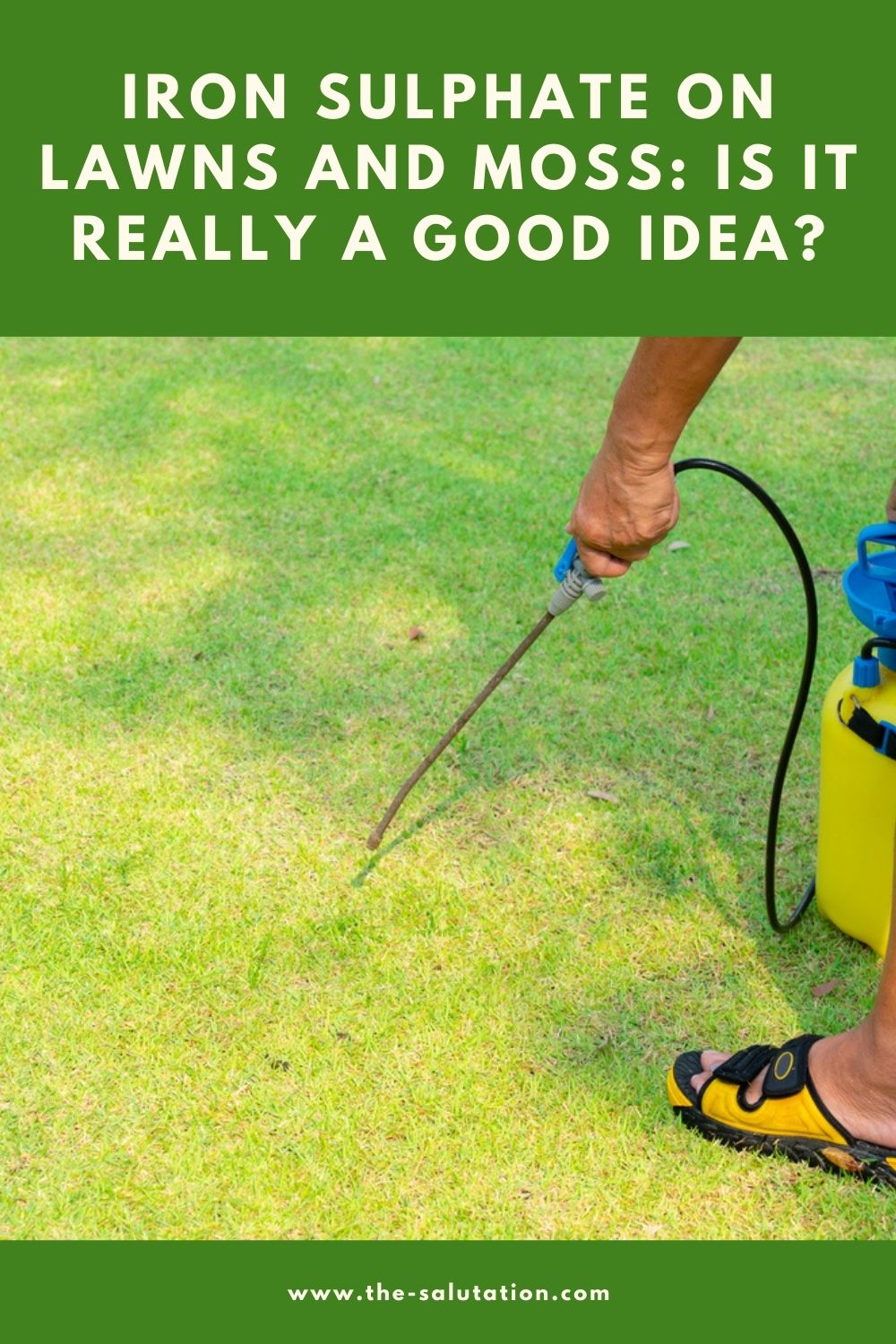 Iron Sulphate on Lawns and Moss Is It really a Good Idea 1