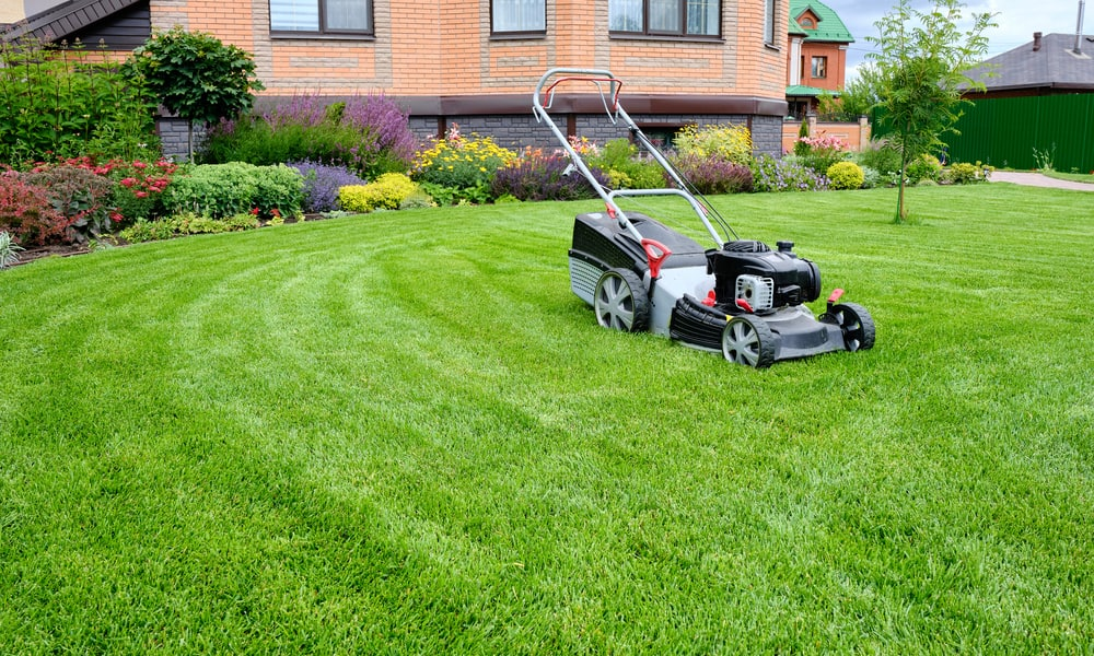 Is there anything you can do to minimise the risks of mowing a damp lawn
