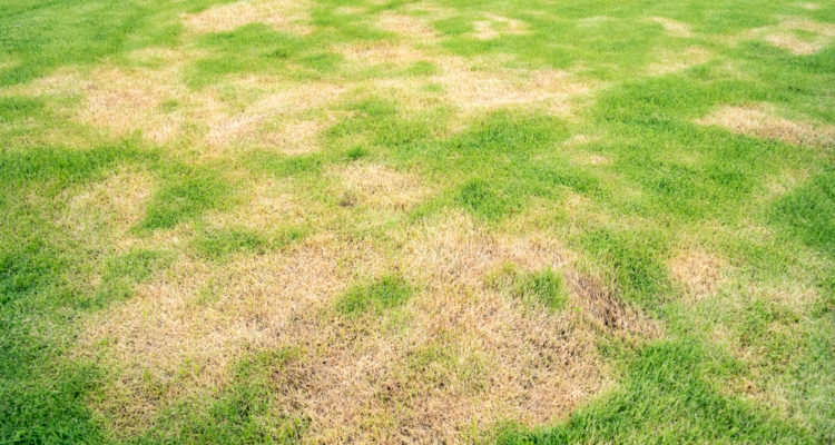 Lawn Patch Repair: What Causes & How to Fix?