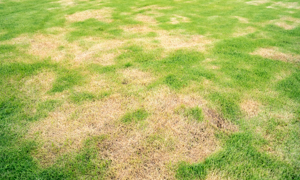 Lawn Patch Repair What Causes & How to Fix