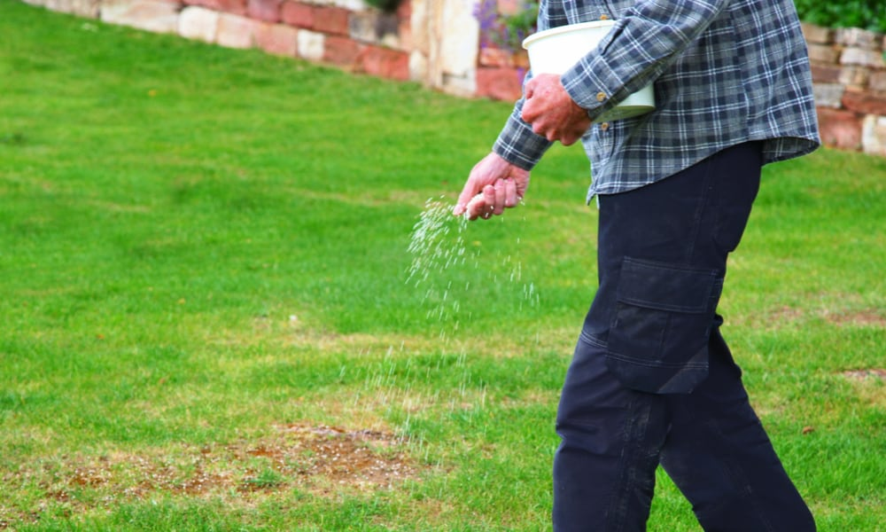 Lawn Patch Repair with seed