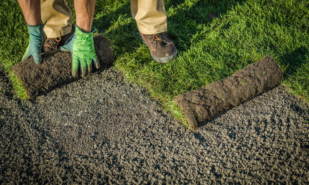 Lawn Patch Repair with turf