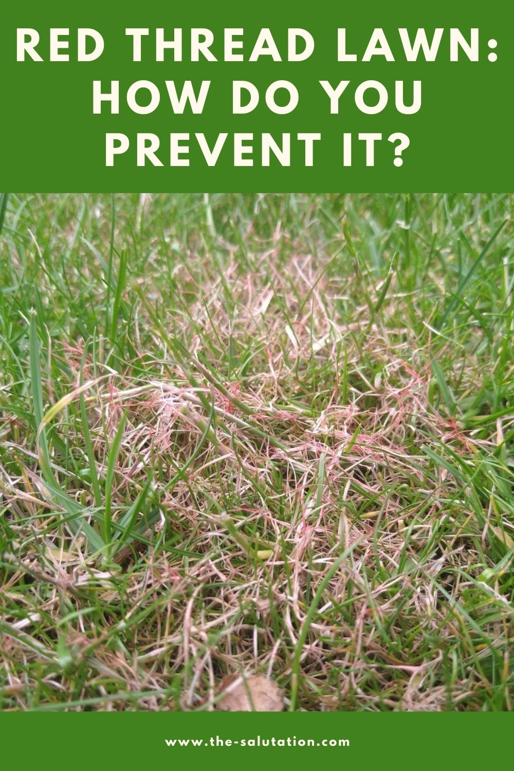 Red Thread Lawn How Do You Prevent It 2