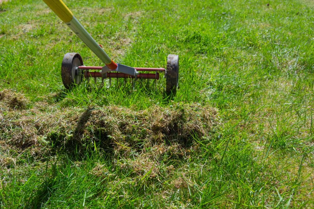 Remove the moss by scarifying