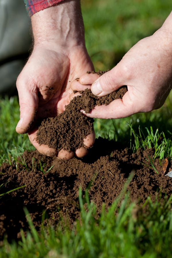 Soil Test How To Know The Needs of Your Soil