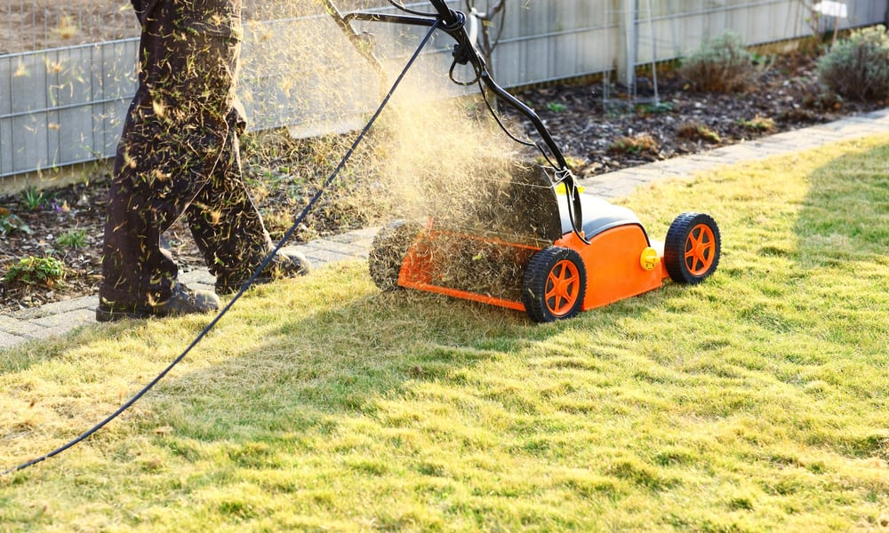 Spring or Autumn - When to Scarify Lawn in the UK