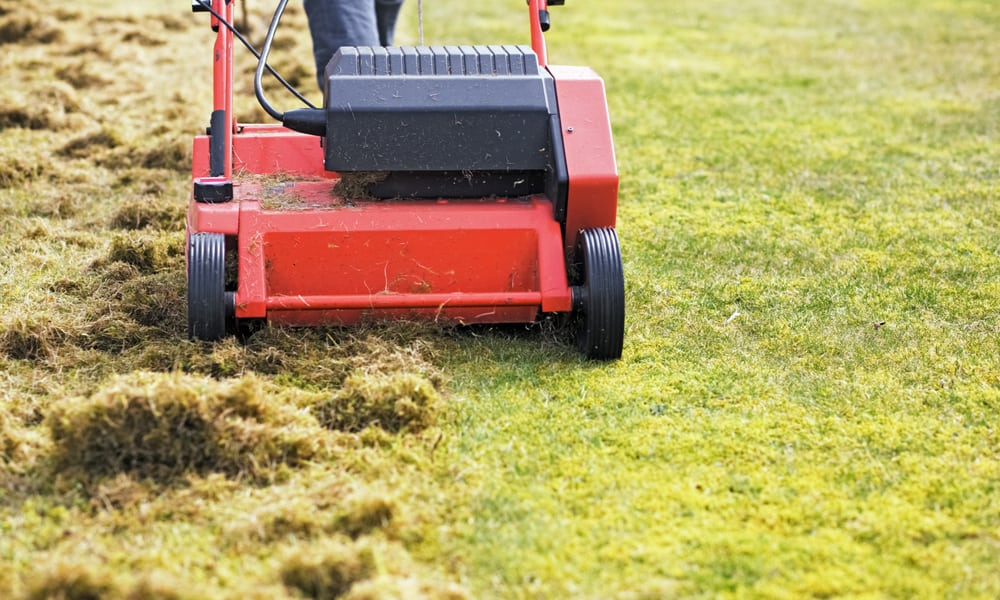 Spring vs. Autumn When is the Best Time to Scarify lawn