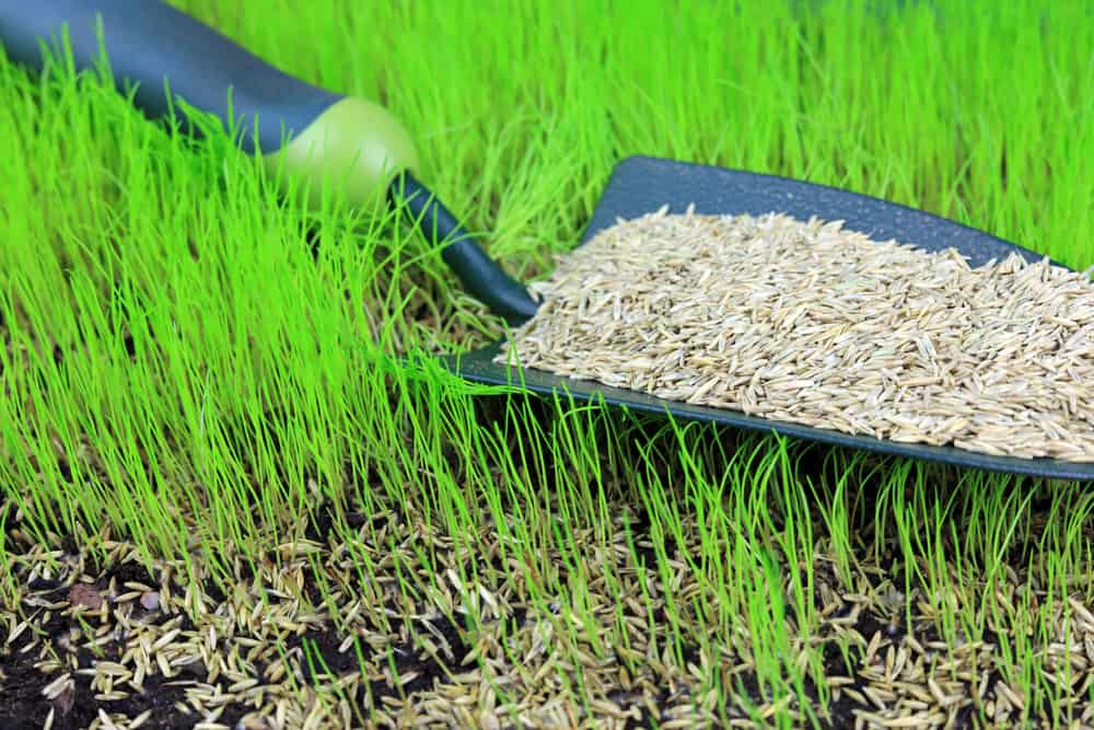 Use the right grass seed for your conditions
